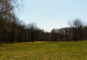 Blog Daffodils Field