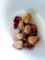 Blogging Tea Rose Buds